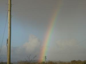 CAVAN RAINBOW