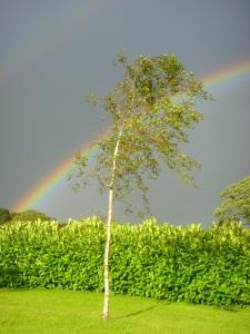 KINGSFORT RAINBOW