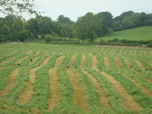 FIRST CUT 2012,IRELAND