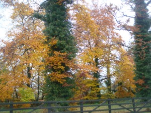 IRISH AUTUMN